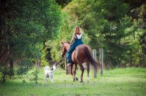 Horses In Family Portraits